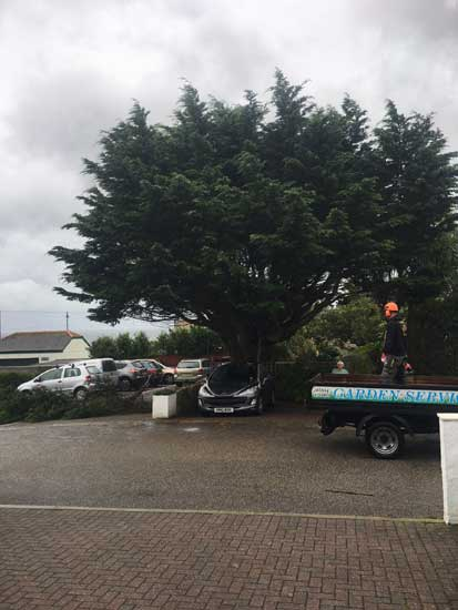 Tree Removal, Penzance